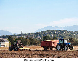 Corn harvest - Two tractors working on field during the...