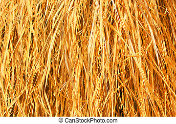 Yellow dry grass background. Dry grass texture.