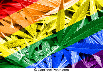 Rainbow Flag on cannabis background. Drug policy....