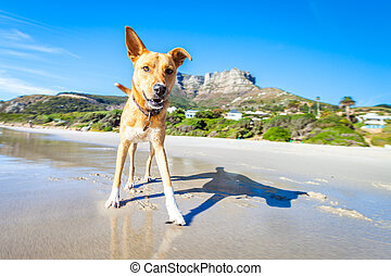 dog playing at the beach - terrier dog having fun,running ,...