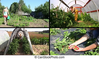 gardening clips collage - Woman watering beans Senior care...