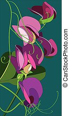 sweet pea flower - vector illustration of a sweet pea flower...