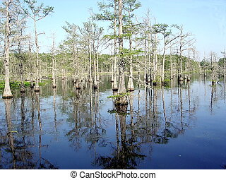 Mississippi Black Bayou 2003 - Reflection of cypress tree...