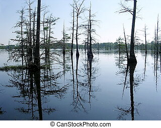 Mississippi Black Bayou evening 2003 - Reflection of cypress...