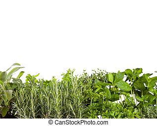 vario, fresco, hierbas, en, blanco,