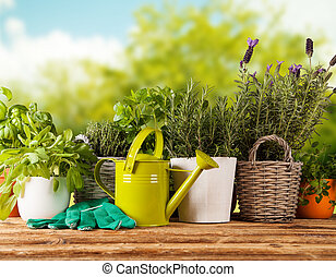 Fresh herbs in pots - Various kinds of fresh herbs in...