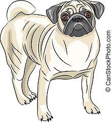 Vector. Pug dog breed.