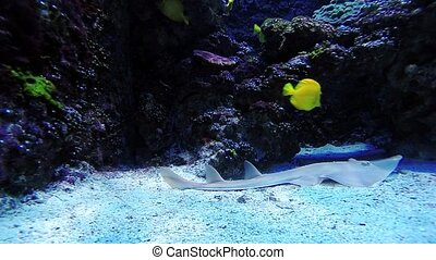 Colorful tropical fishes and fish ramp underwater
