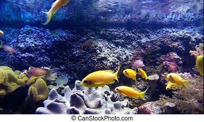 Colorful tropical fishes and marine life underwater