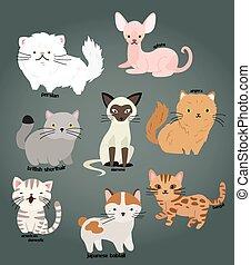 Cat Vector Set
