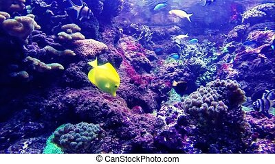 Colorful tropical fishes
