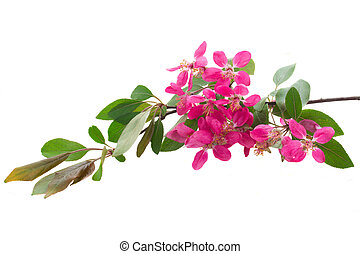 Blossoming pink tree Flowers - Blossoming pink cherry tree...