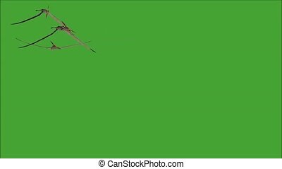 Pteranodon Movie - Pteranodon was a pterosaur from the...