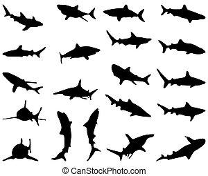sharks - Black silhouette of sharks, vector illustration