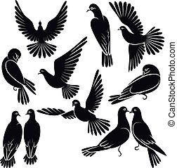 Silhouettes of pigeons
