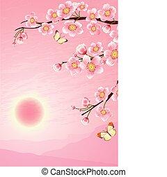 sakura - Vector illustration - sakura blossom