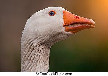 particular og withe goose
