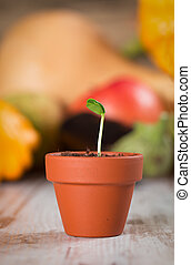 Young vegetable sprout on a wooden background