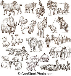 Farm animals Full sized hand drawn illustrations - Animals...