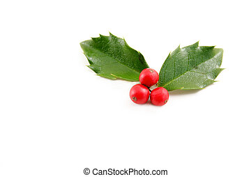 Holly leaves with red berries on a white background with...