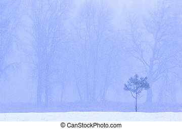 Snowing - Snow falls across the landscape of a young lone...
