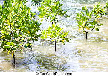 mangrove, reflorestamento,