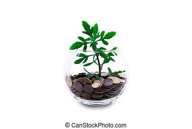 Money plant in a glass