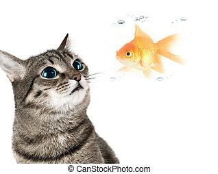 Cat and fish - Cat with green eyes looking for goldfish on...