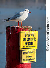 seagull on a lake - gulls on the traunsee in gmunden,...