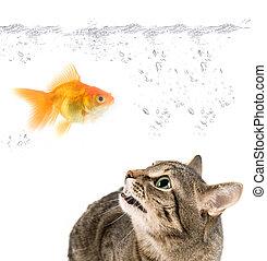 enojado, gato, oro, pez