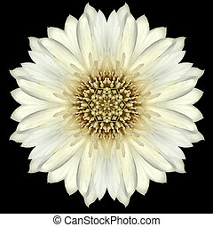 White Flower Mandala Kaleidoscope Isolated on Black - White...