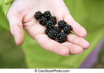 Blackberries on a woman hand in the forest
