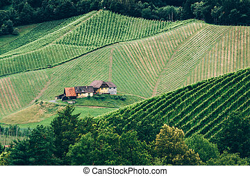 Vineyard in Styria at Summer with a Farmhouse