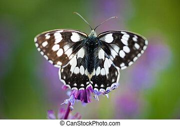 Butterfly Tirumala hamata orientalis on a violet wild flower...