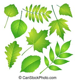 Green leaves set. Vector illustration Eps 10.