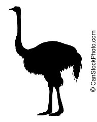 Ostrich - Abstract vector illustration of an ostrich...