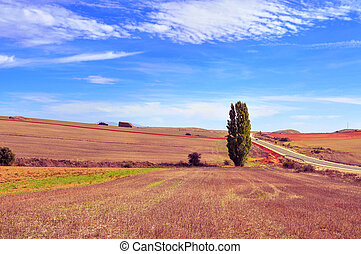 cornfield landscape in the province of Soria, Spain - view...