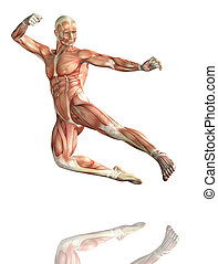 3D male figure in kick boxing pose with muscle map - 3D...