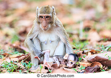 Monkey family (Crab-eating macaque) in Thailand