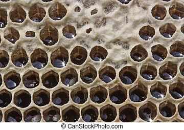 miel, cierre, vida, insectos