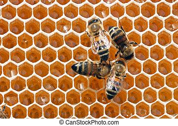 abejas, atrás, trabajo