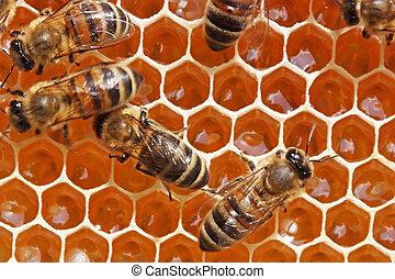 vida, insectos, diálogo, abejas