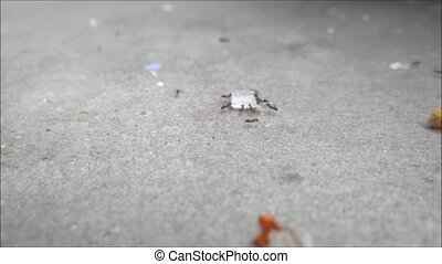 Ants Run-Time-lapse - Ants are taking a piece of candy on...