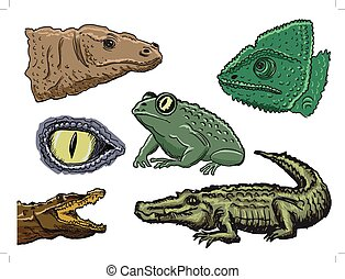 reptiles - set of illustrations of reptiles