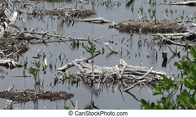 Mexican Swamp Land - Zoom Out - Discover a Mexican swamp...