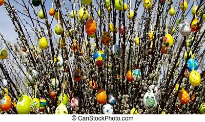easter shrub willow