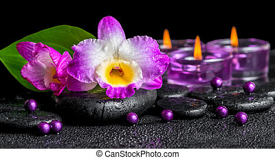 spa background of purple orchid dendrobium, green leaf Calla...