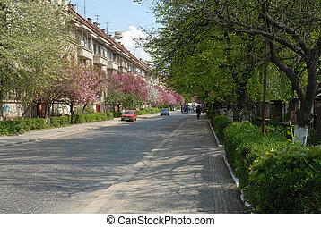 Uzhgorod - Street with sakuras in Uzhgorod, Transcarpathia,...