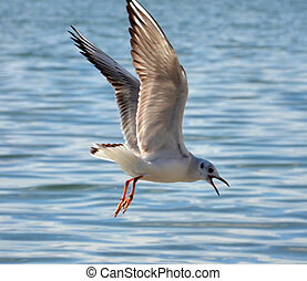seagulls - picture of a seagulls bird