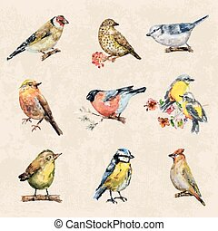 vintage a collection of birds. watercolor painting